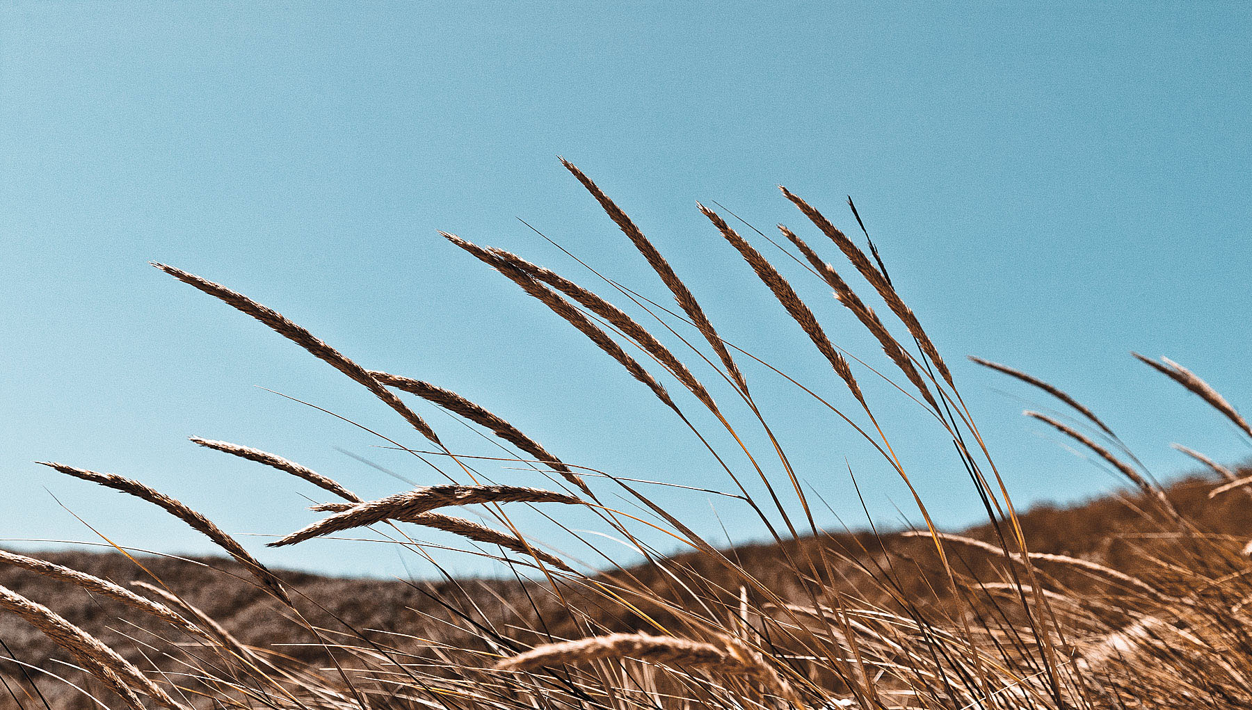 Grass, Florence, Oregon