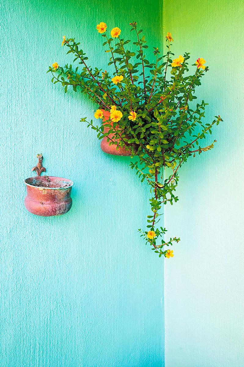 Pot Of Flowers, Bermuda