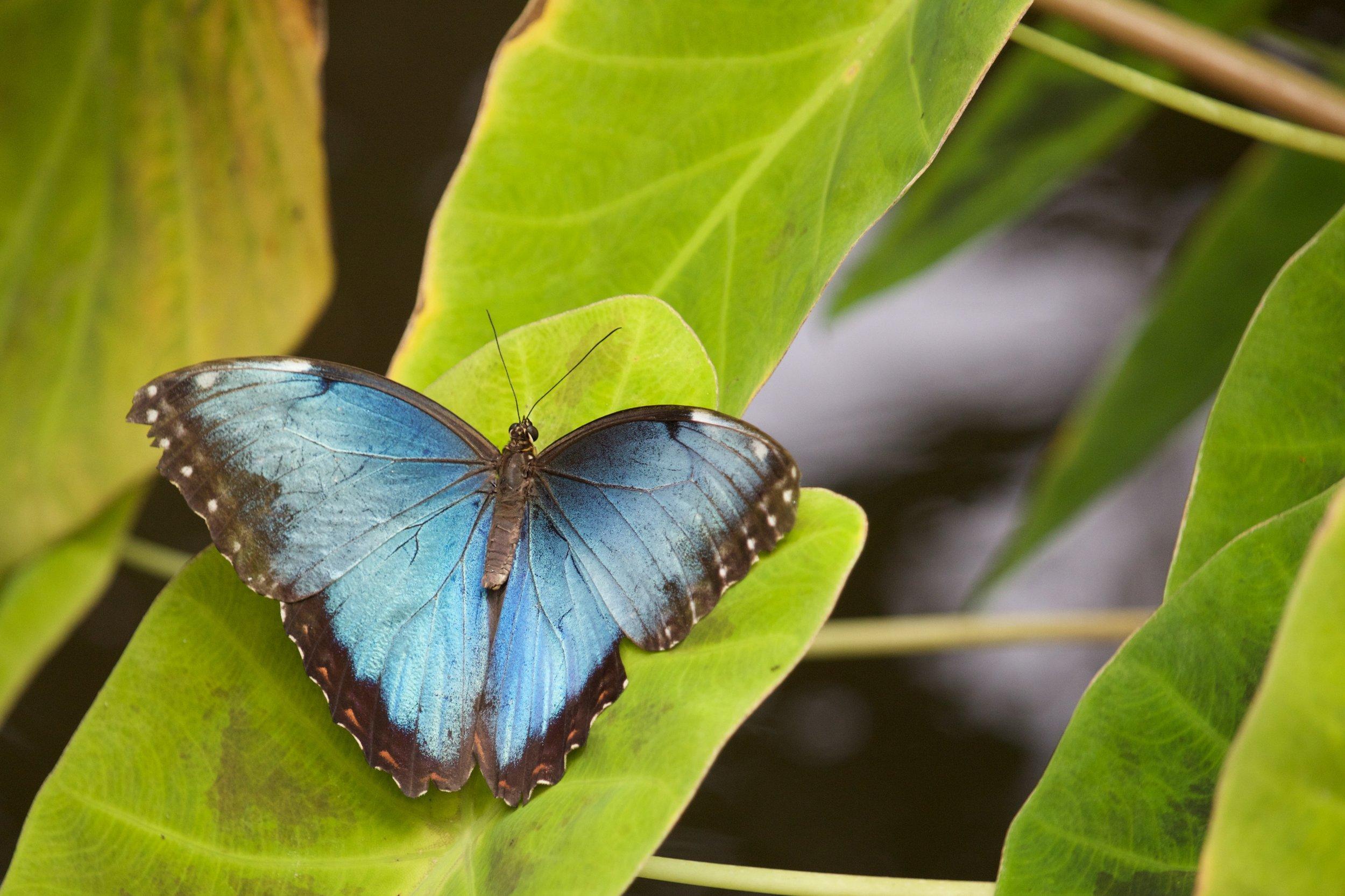 butterfly-87733-unsplash.jpg