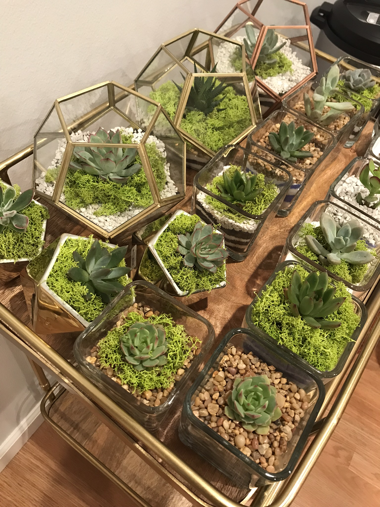 gold terrariums.jpg