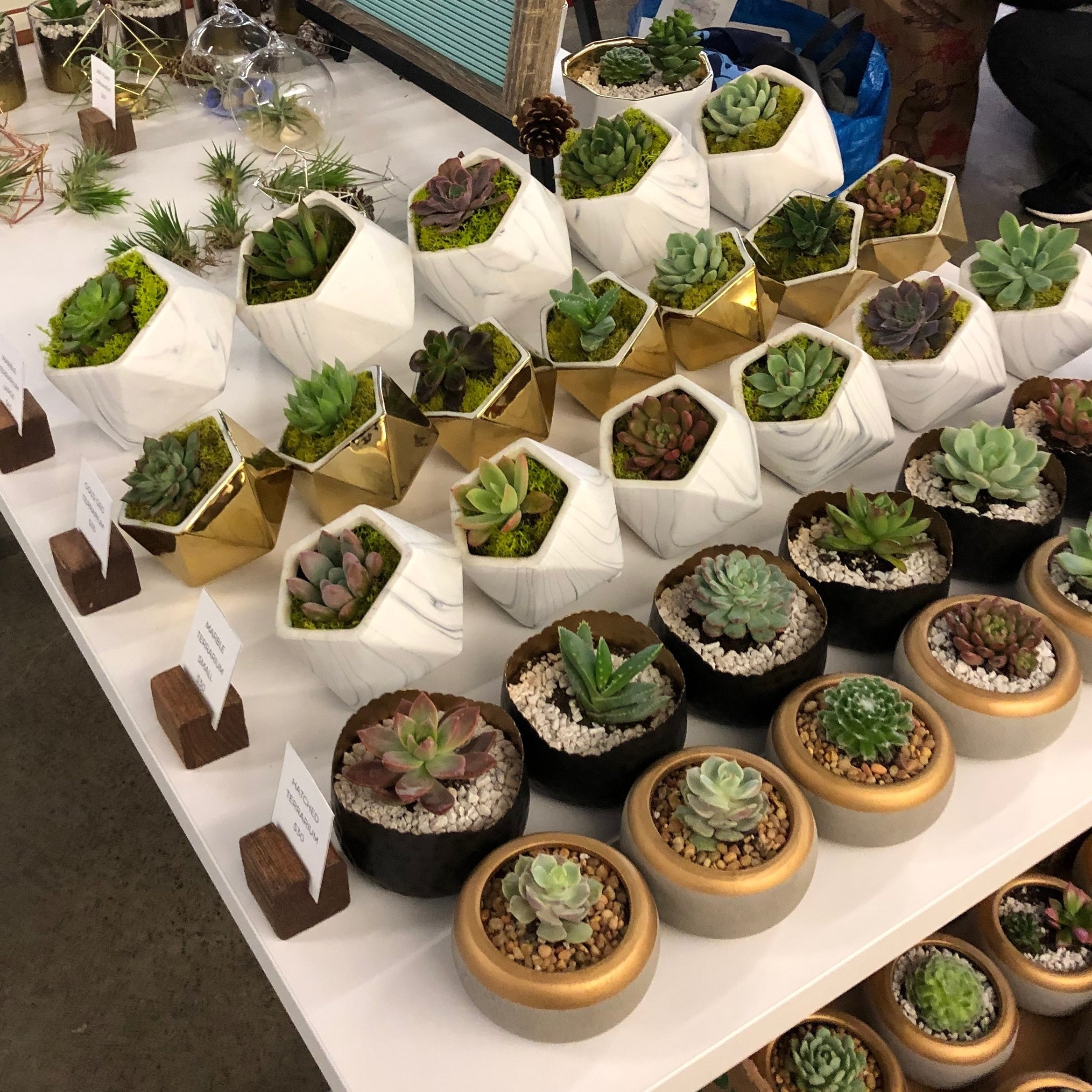 pop-ups - HAND CRAFTED TERRARIUMS