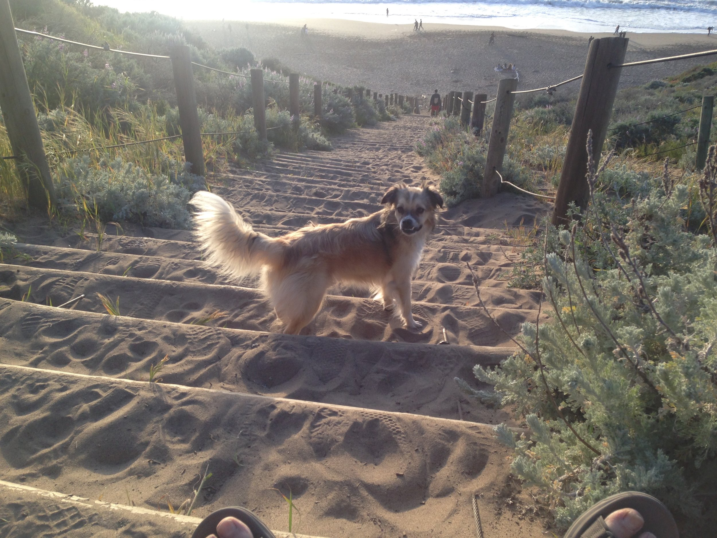Sand ladder to Baker Beach. Intrepid pooch Huck may or may not join the walking tours.