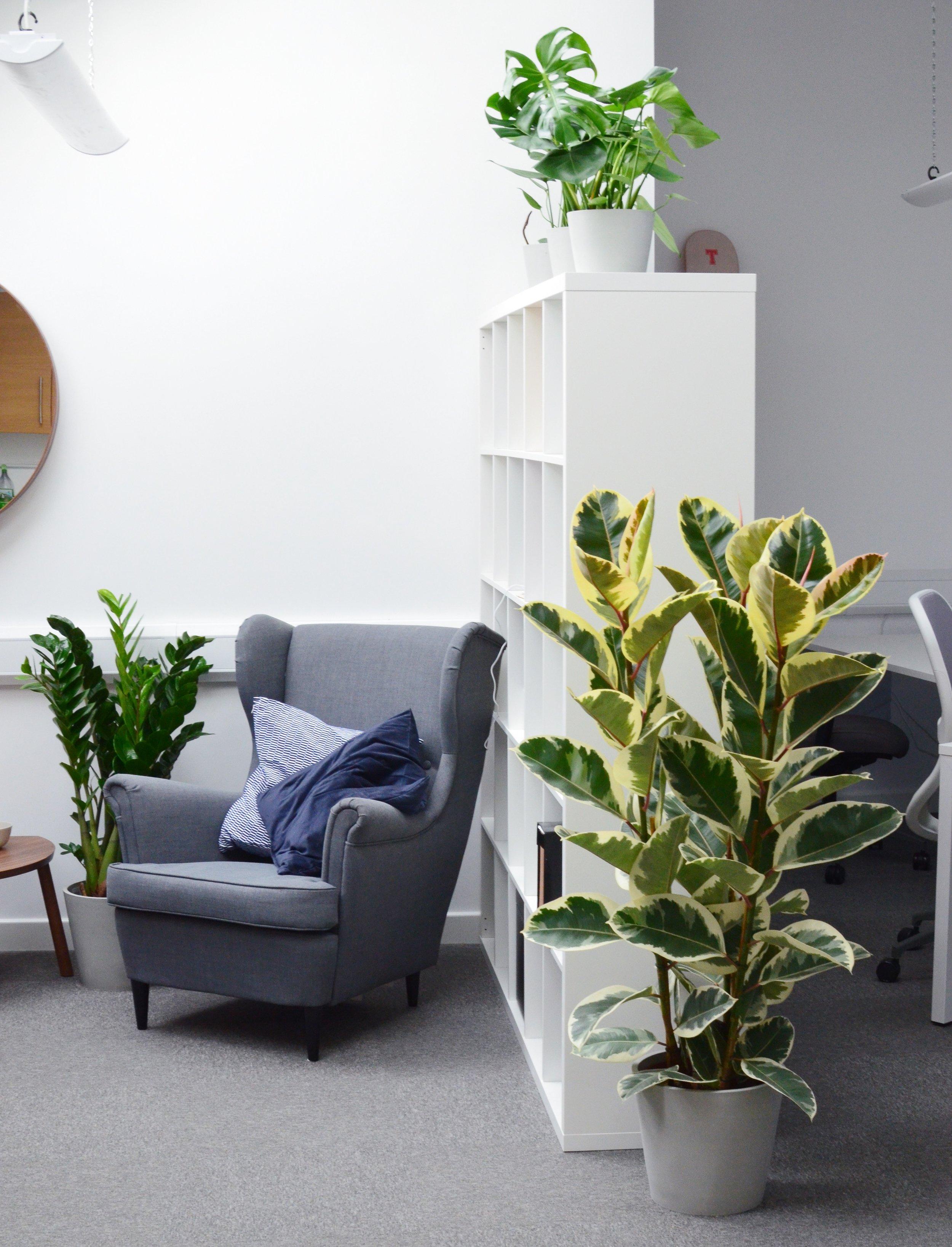 Pilea Plant Shop Houseplant Office Installation.JPG