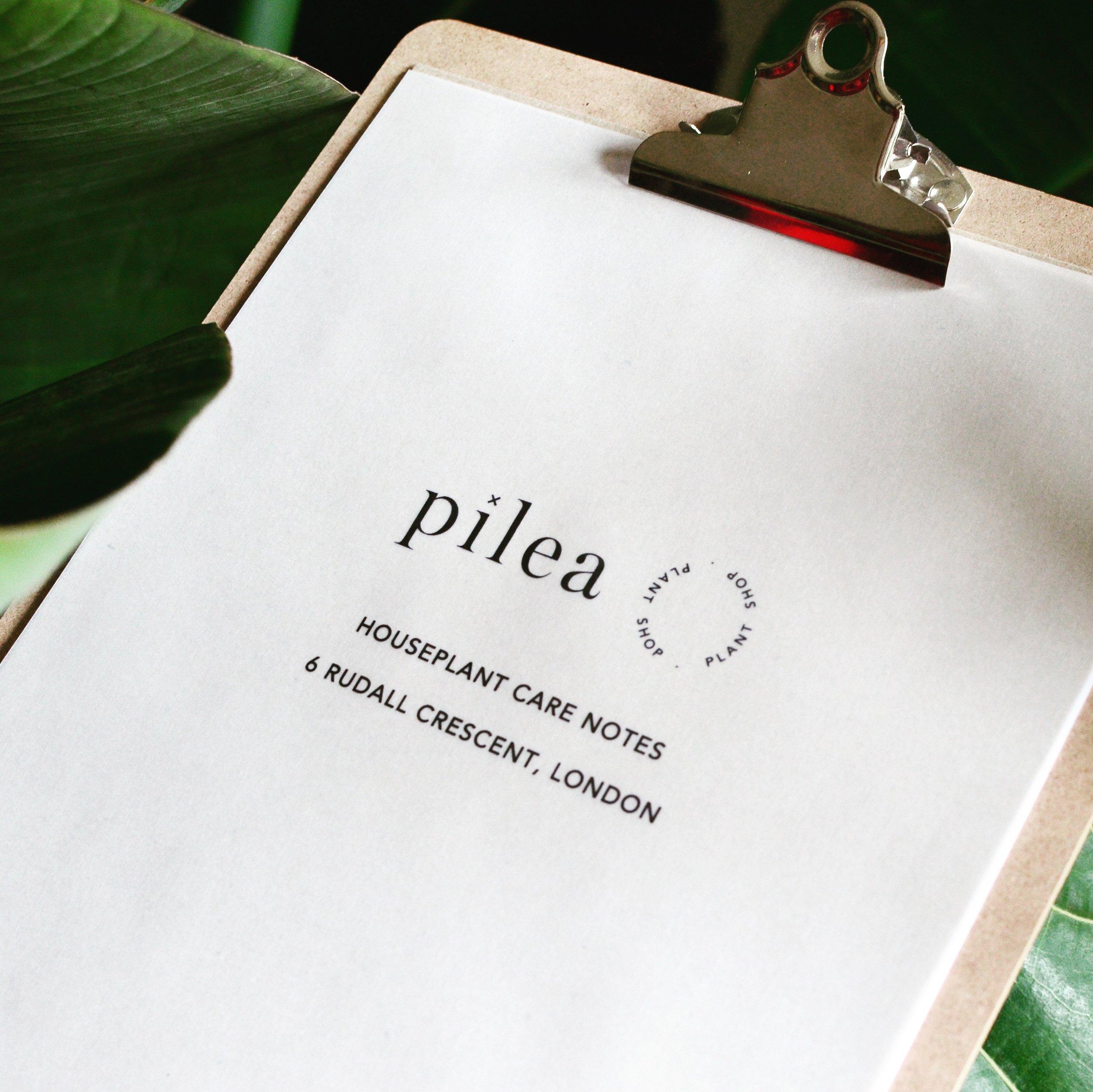 Pilea Plant Shop Houseplant Care Notes.JPG