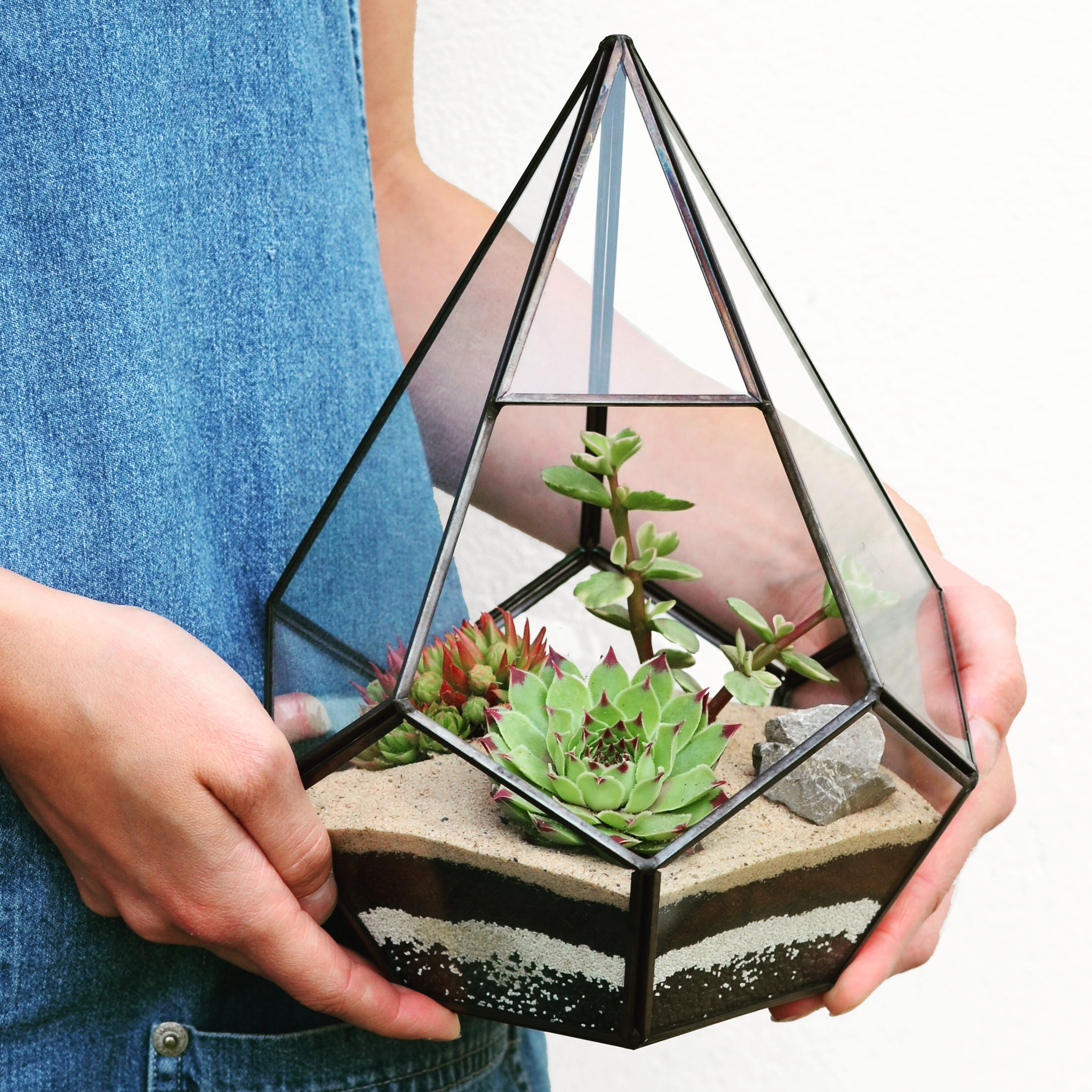 Pilea Plant Shop Terrarium Workshop Hold.JPG