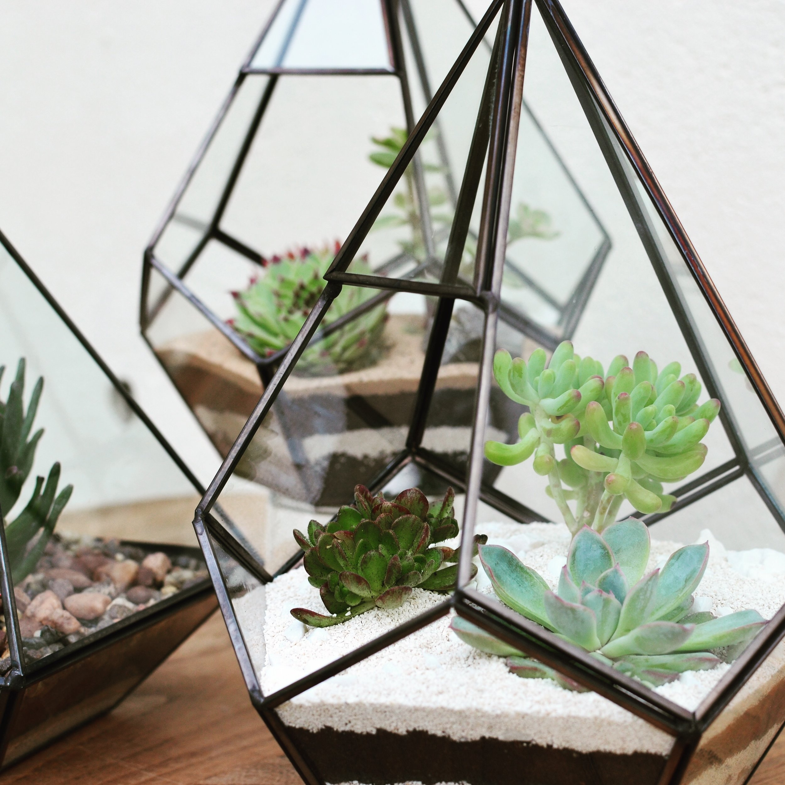 Pilea Plant Shop Terrarium Workshop.JPG