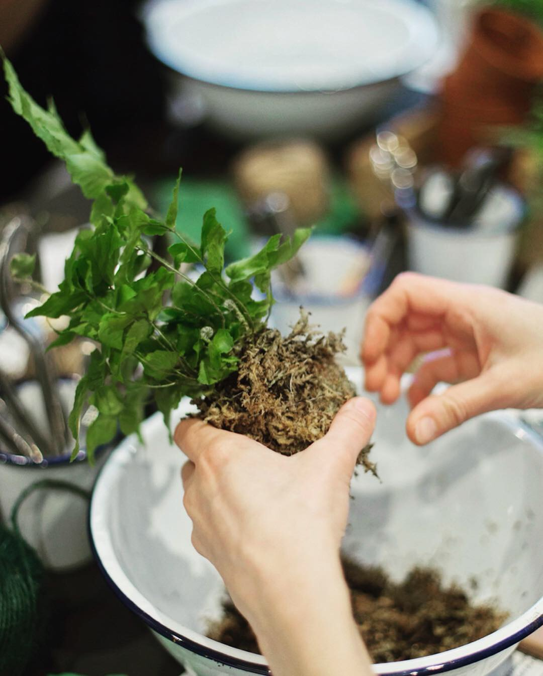 Pilea Plant Shop Kokedama Workshop Making.JPG