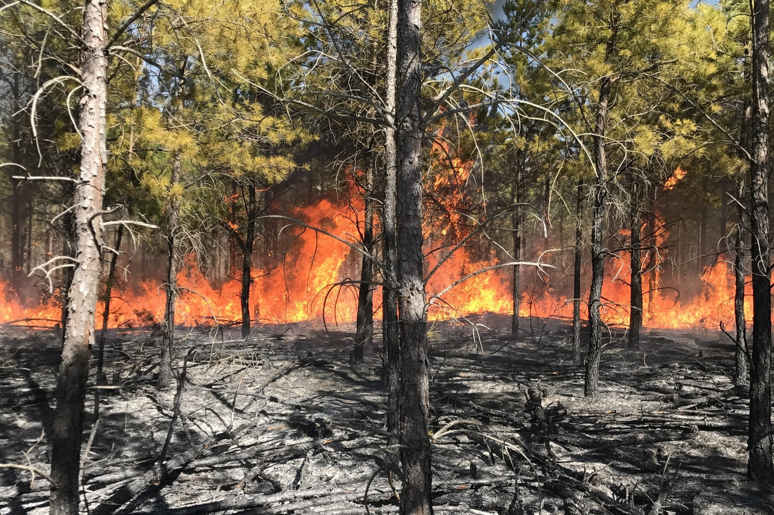 burning 2017 160 - Copy.JPG
