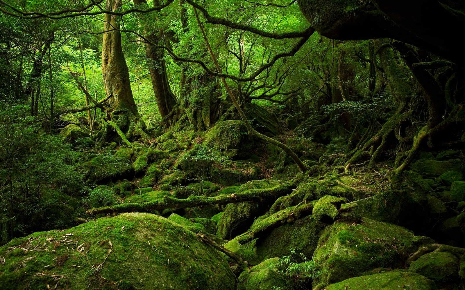 forest bathing - Washington, d.c.