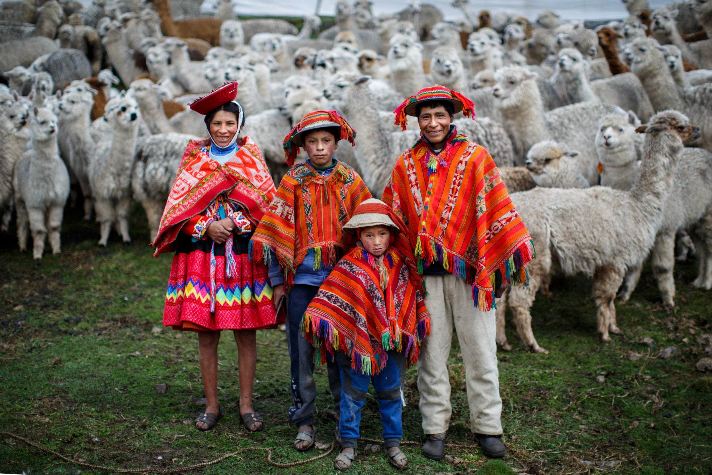 The Yupanqui Mamani Family in front of their alpaca herd.