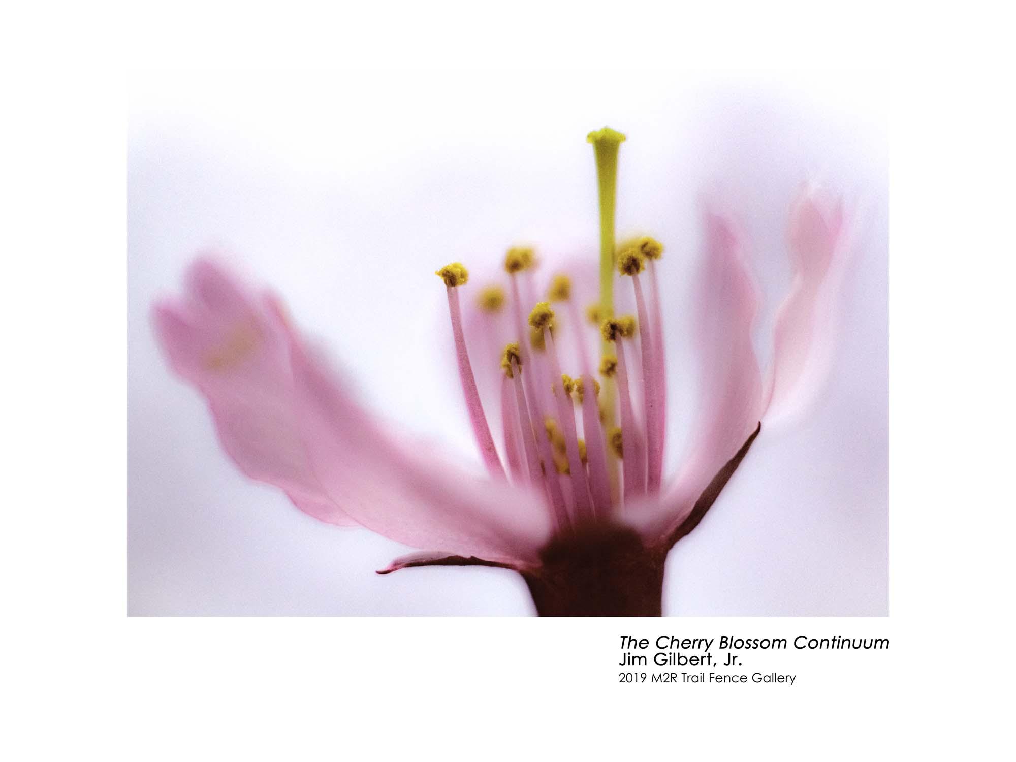 Jim_Gilbert_Jr-The_Cherry_Blossom_Continuum.jpg