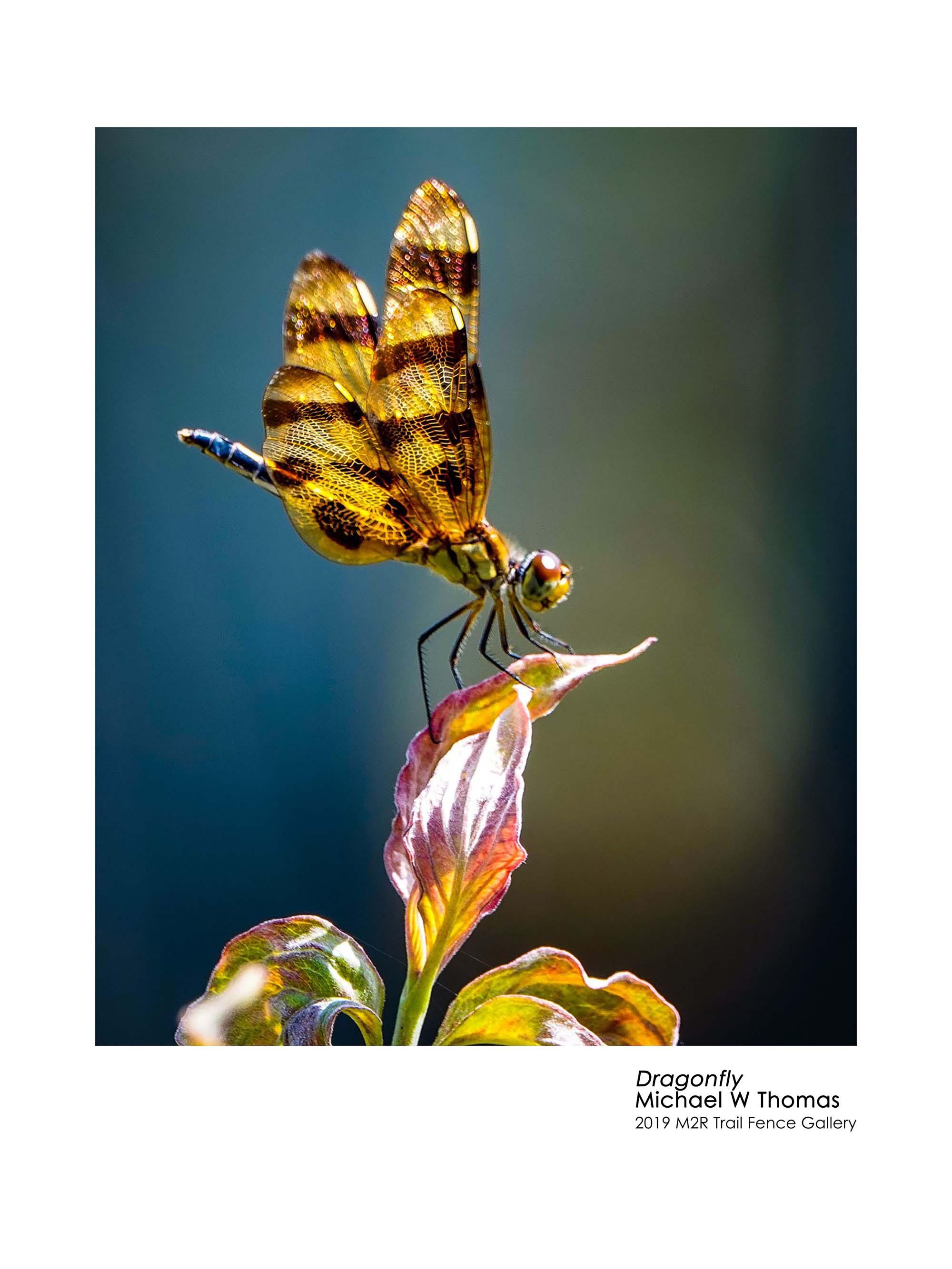 michael_thomas_dragonfly - Michael Thomas.jpg