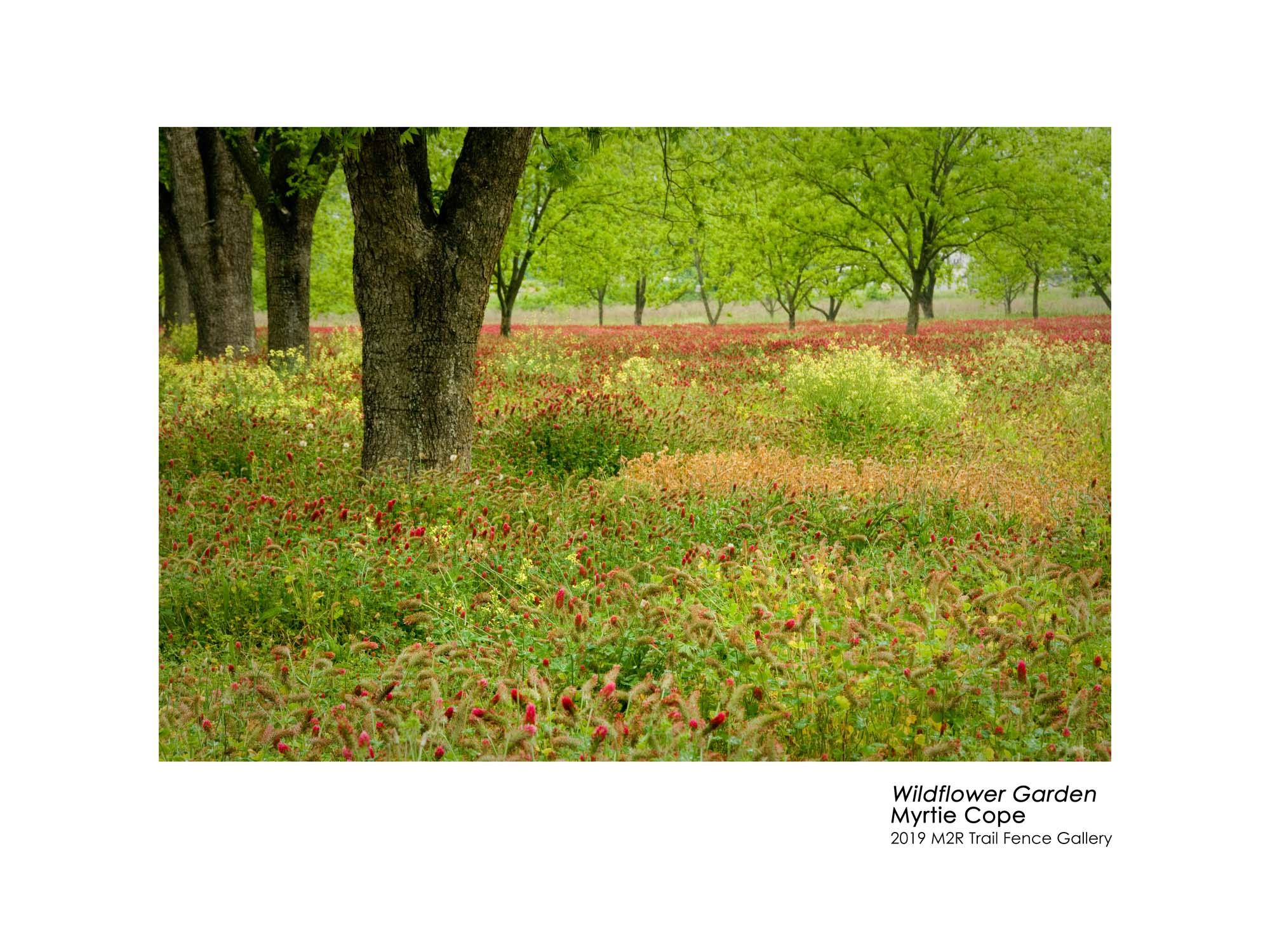 Myrtie_Cope_Wildflower Garden - Myrtie Cope.jpg
