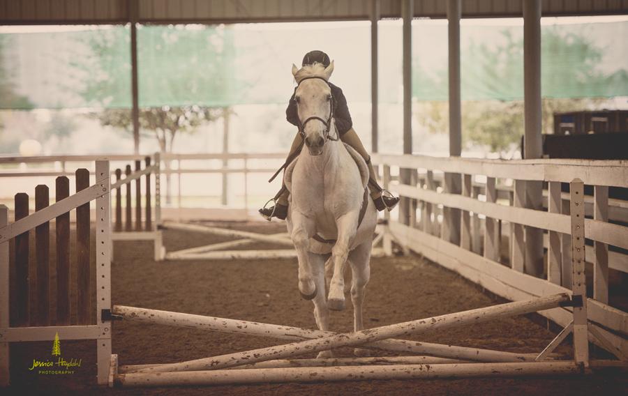 horse_jumping_2015_3web