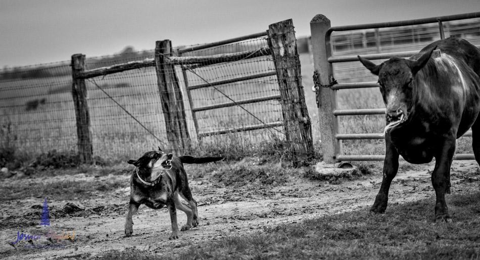 ranch_life_55