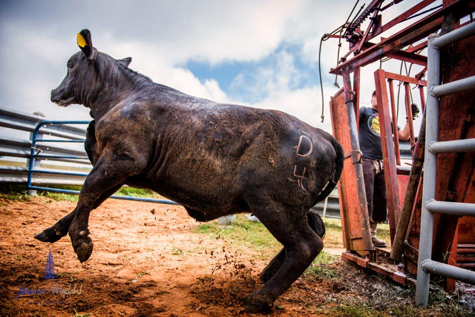 ranch_life_9