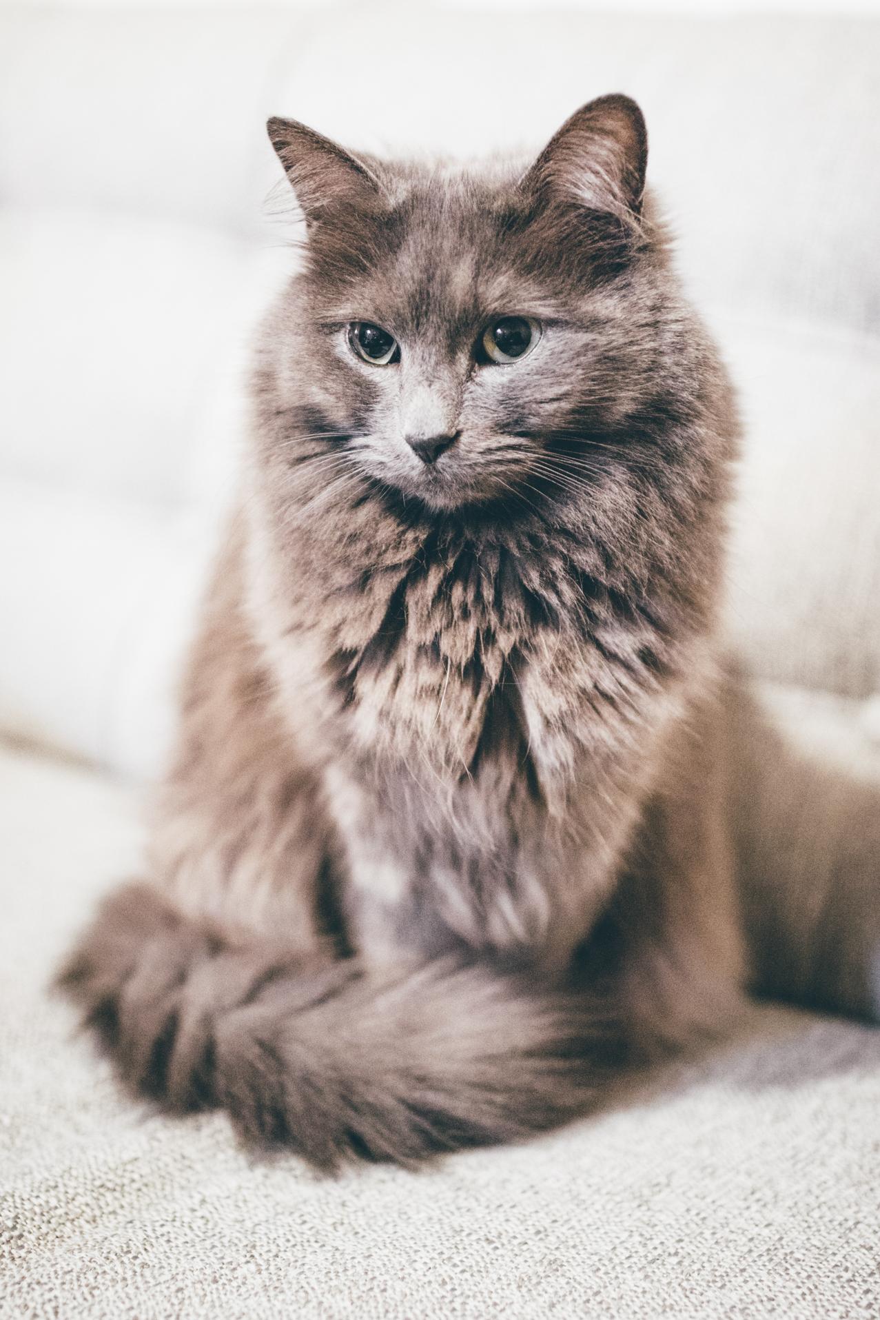 lady_cat-2.jpg