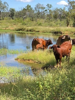 cattle station jobs outbackgovie governess.jpg