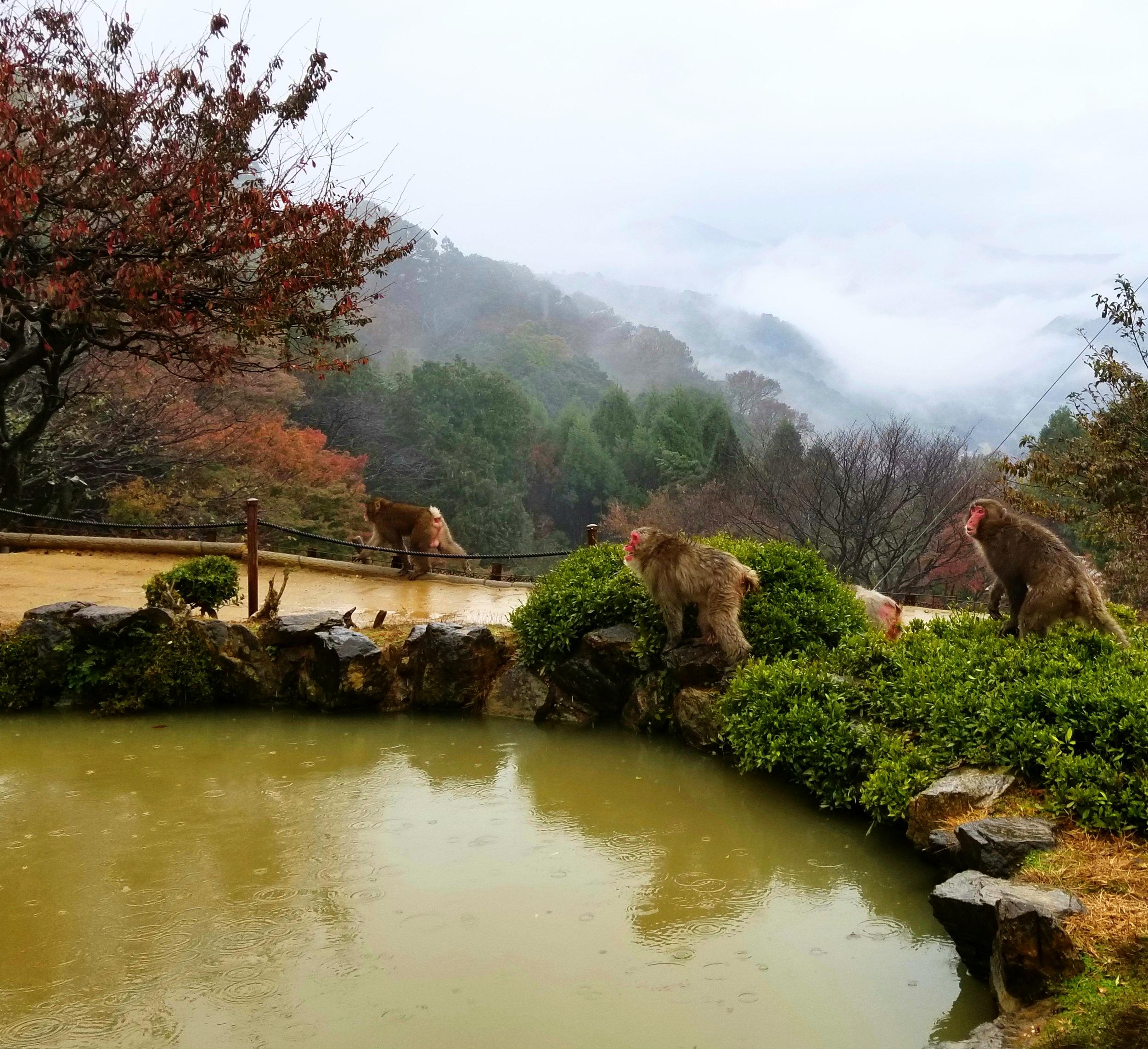 uprooted-traveler-iwatayama-monkey-park-vegan-guide-kyoto
