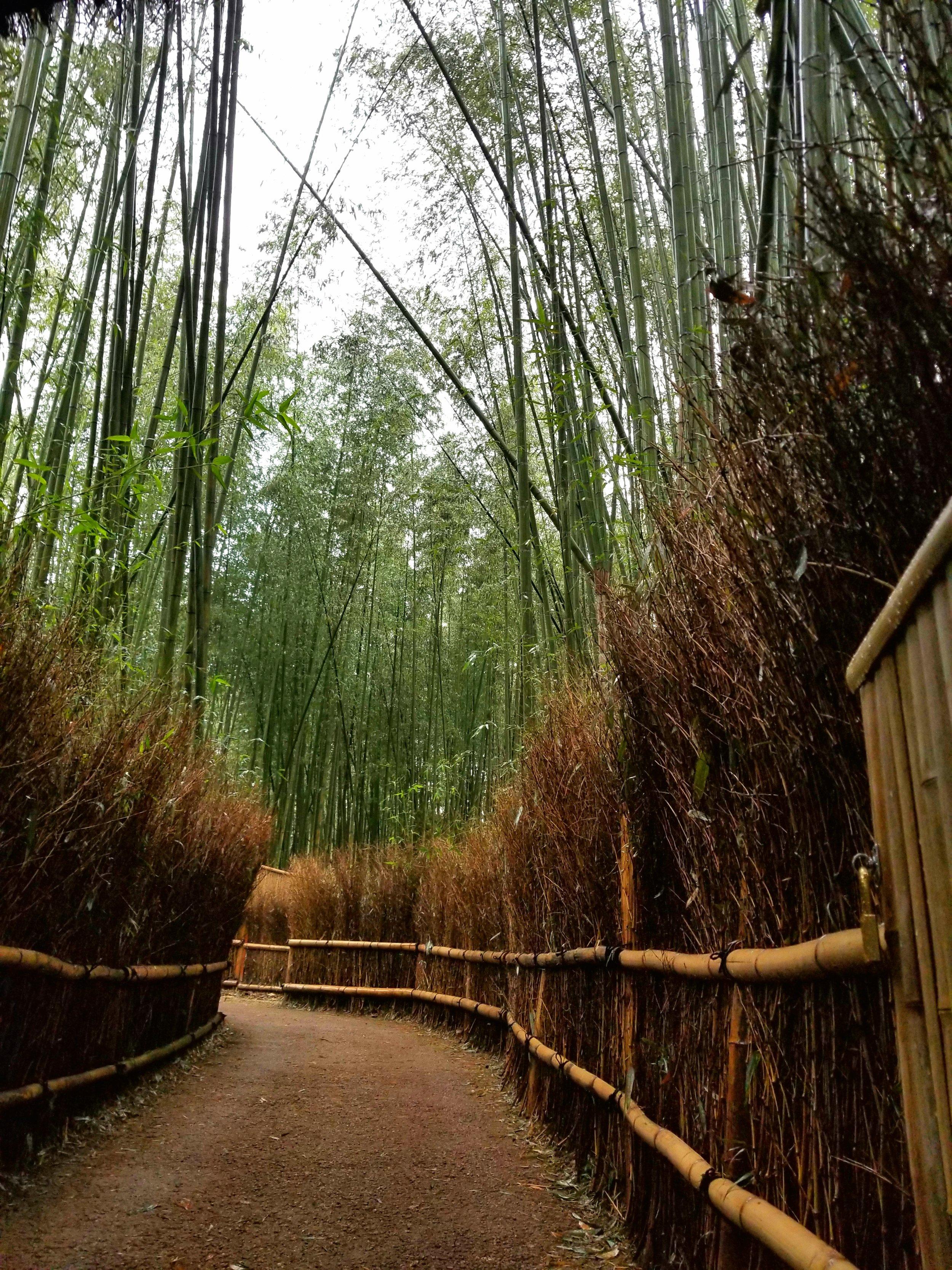 uprooted-traveler-Arashiyama-Bamboo-Grove-vegan-guide-kyoto
