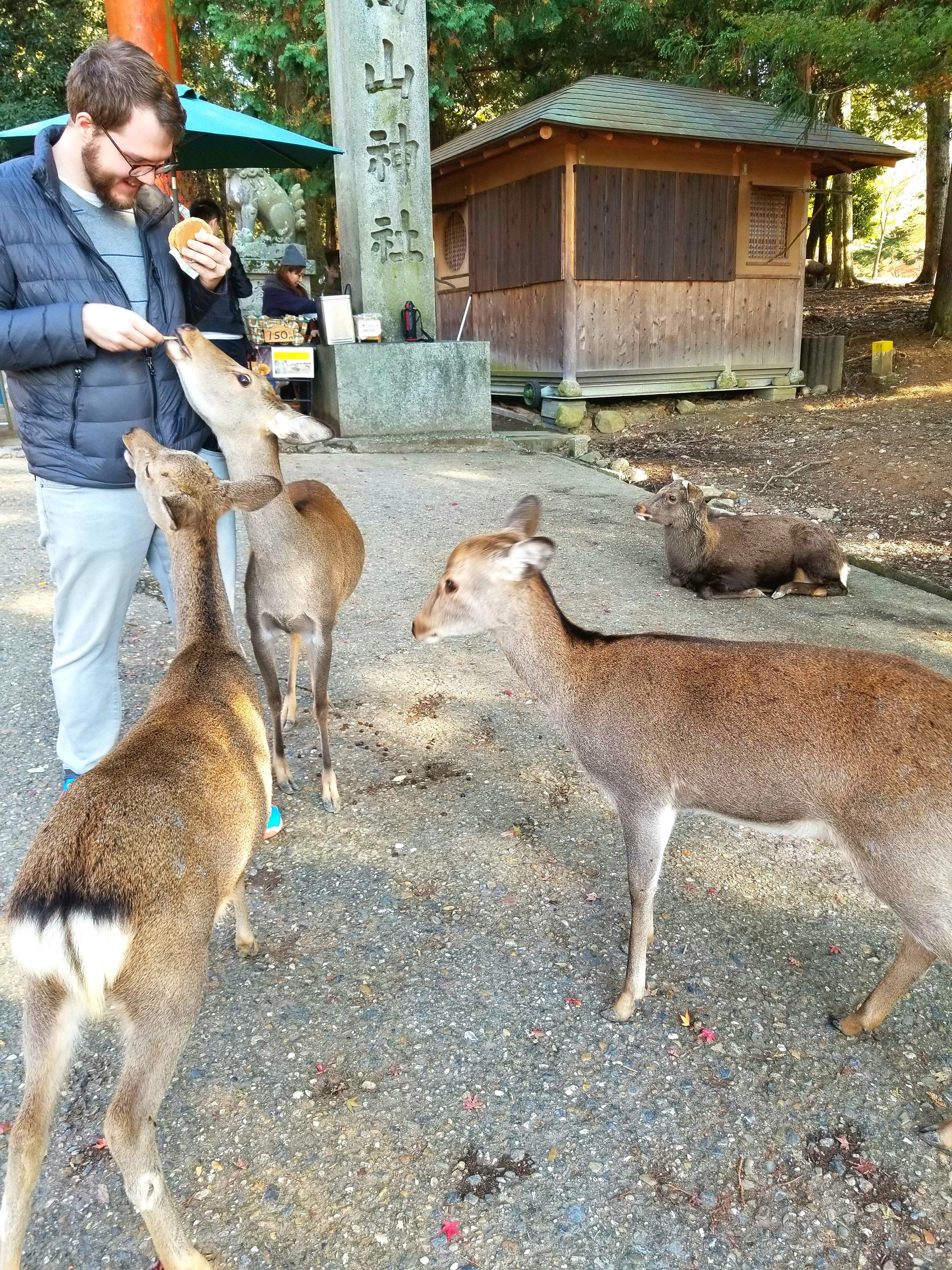 uprooted-traveler-deer-nara-park-vegan-guide-to-kyoto