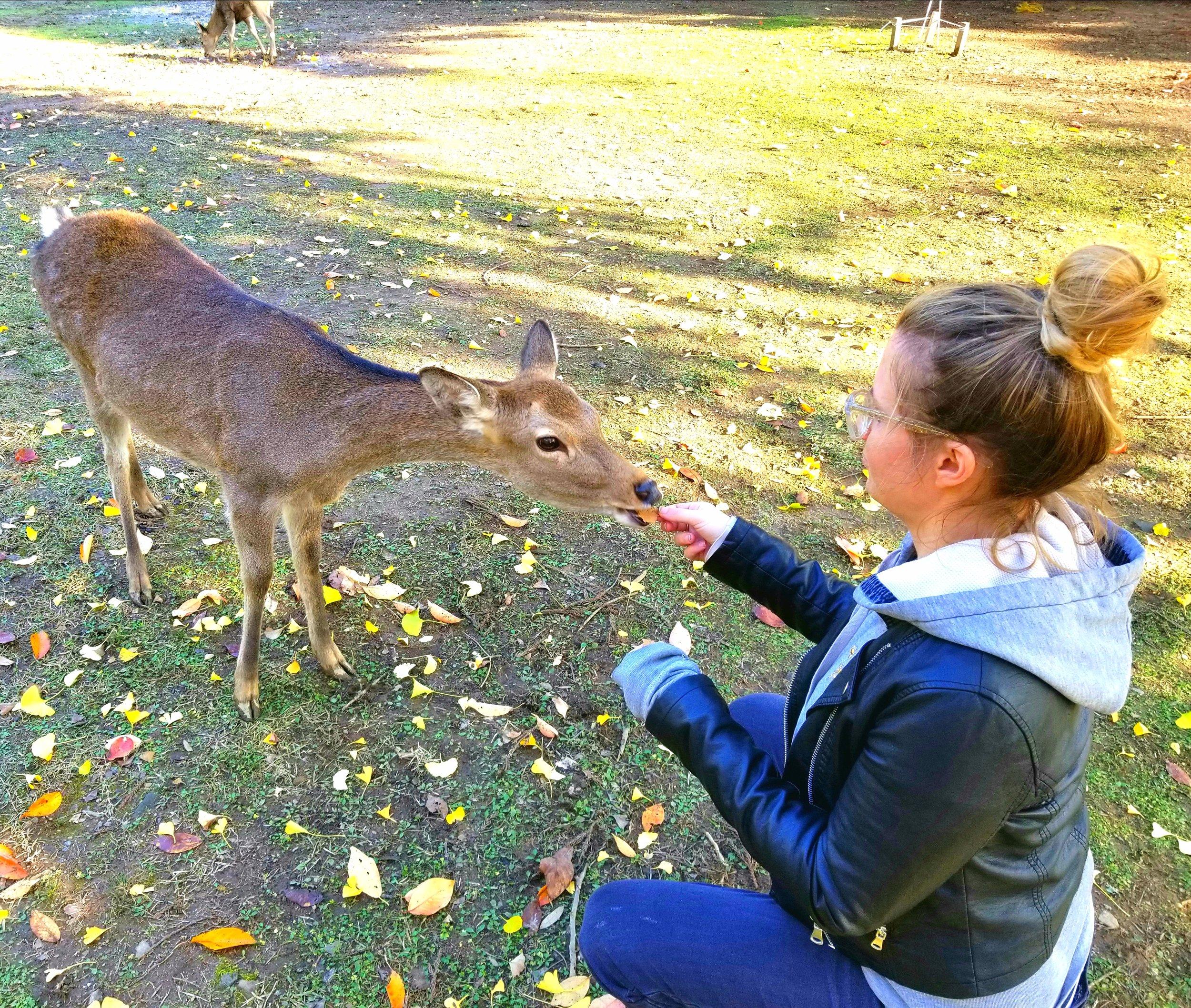 uprooted-traveler-vegan-guide-to-kyoto-nara-park-deer