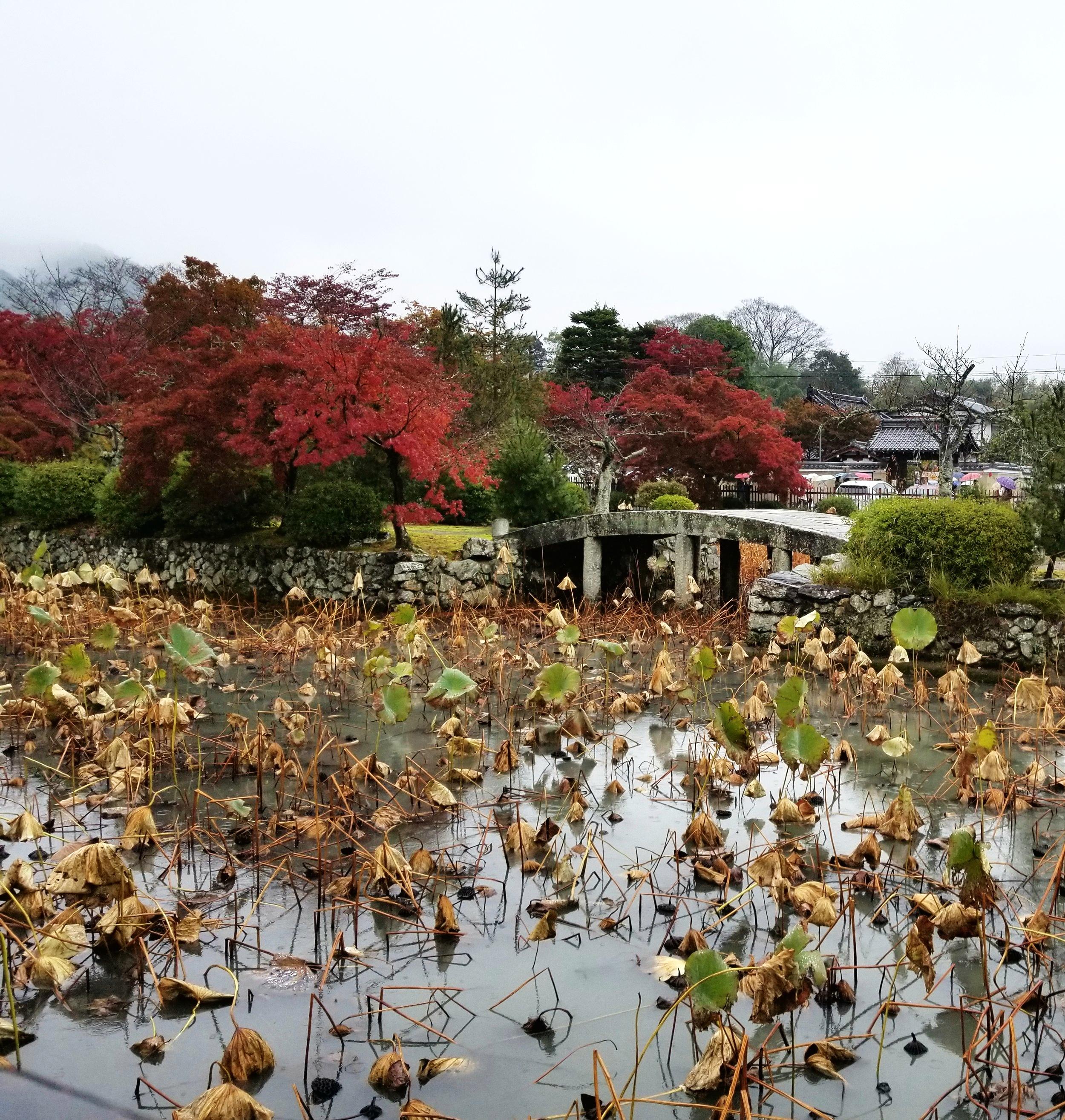 uprooted-traveler-bridge-lilypads-vegan-guide-to-kyoto-zen-garden