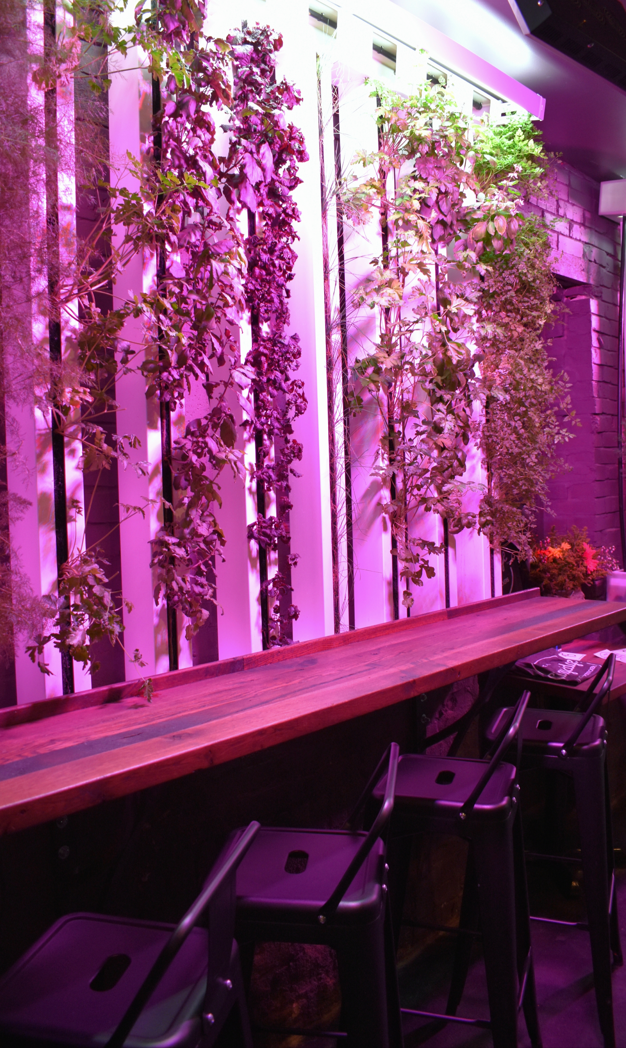 uprooted-traveler-crispy-edge-vegan-plant-based-st-louis-vertical-garden