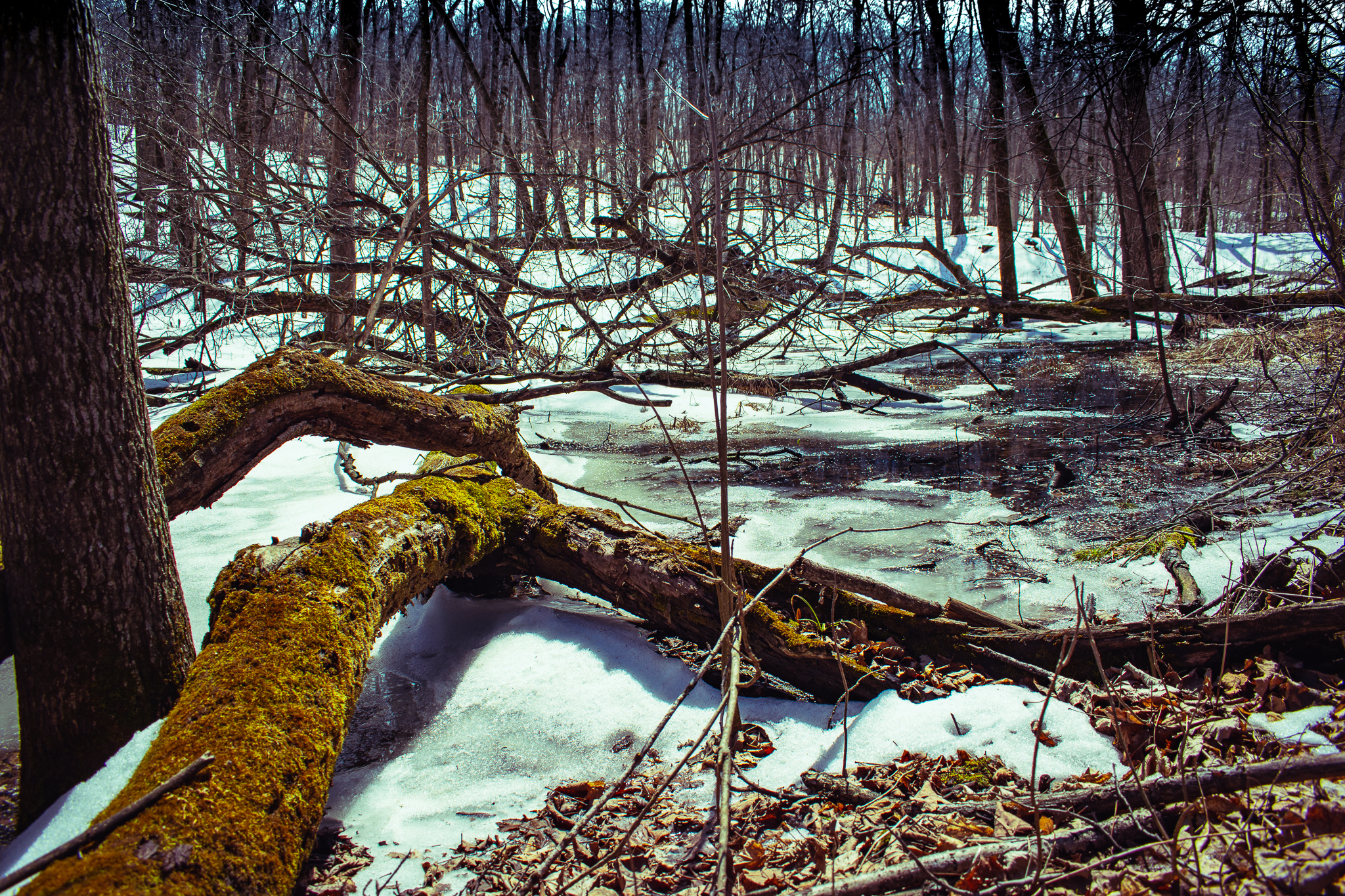 uprooted-traveler-nerstrand-big-woods-state-park-hiking-minneapolis.jpg