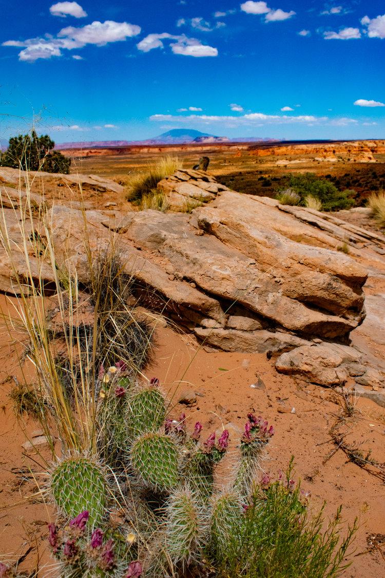 uprooted-traveler-highway-89a-vegan-road-trip-page-arizona.jpg