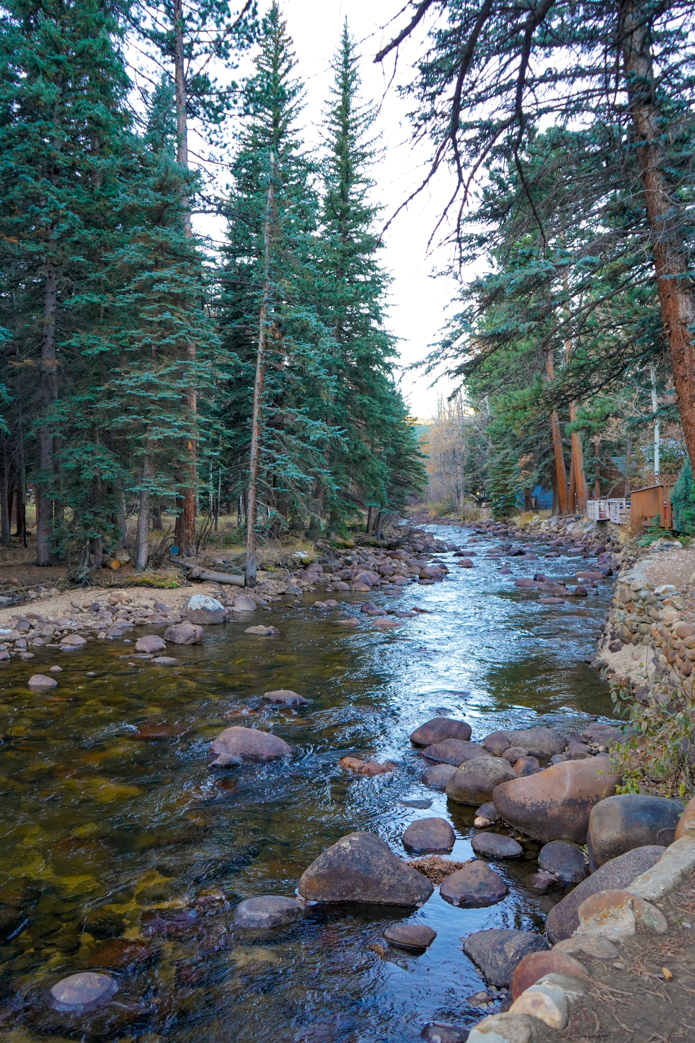 Uprooted-Traveler-rocky-mountain-national-park-cabin-river-spruce.jpg