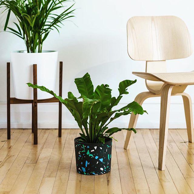 Your funky plant needs a funky handmade terrazzo pot. @specklgoods . . . #terrazzo #houseplants #plantpots #interiordesign #hermanmiller #plantstand #plantstyling #modernhomes #jesmonite #productphotography #handmadepots