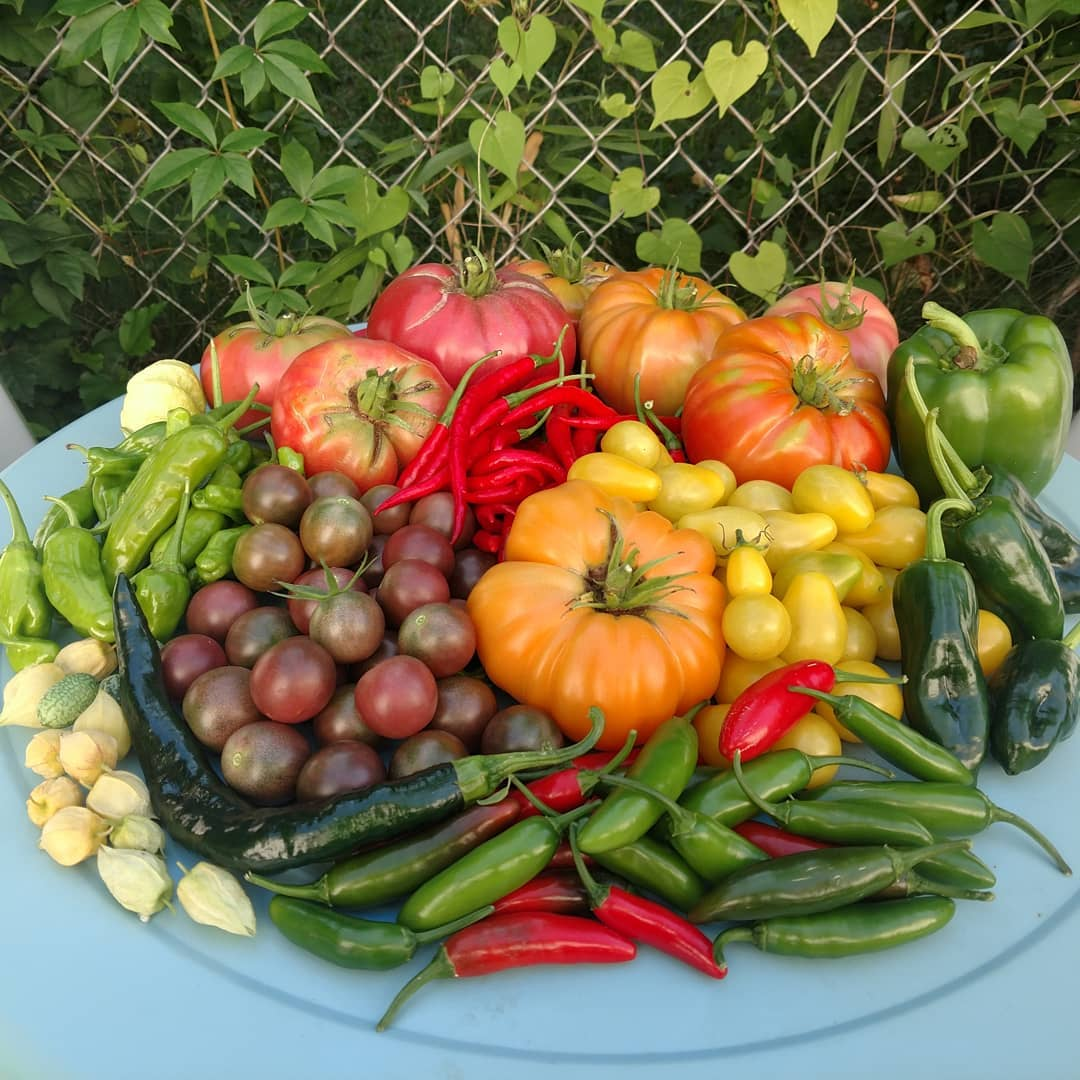 one harvest from 007 acre farms.jpg
