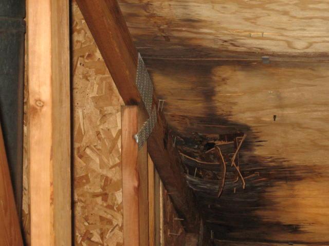 Leaks in an attic...