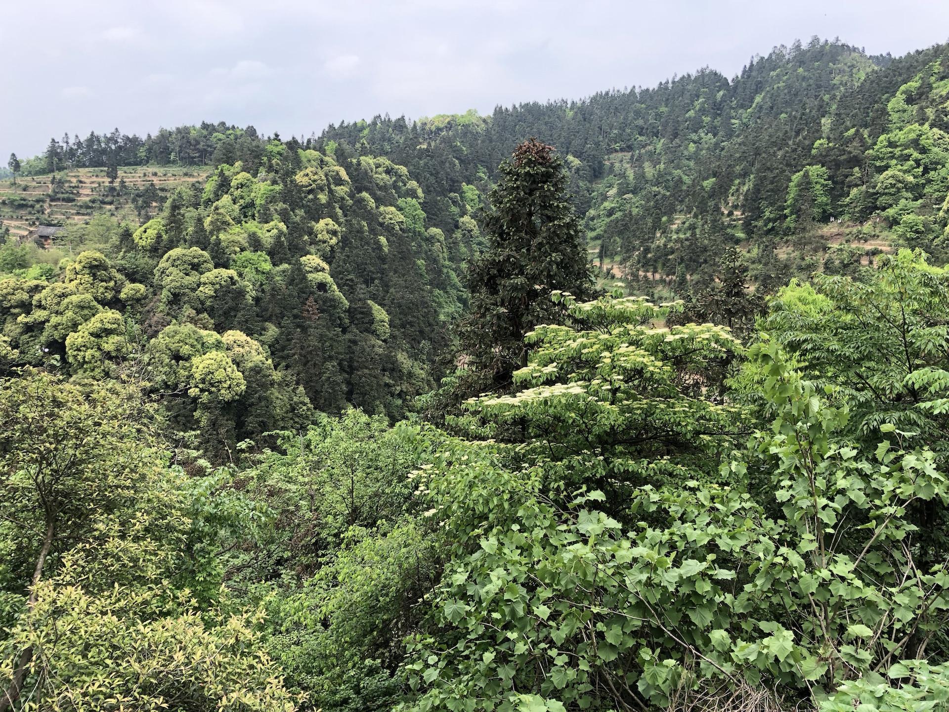 Lush, clean, fertile Guizhou landscape...
