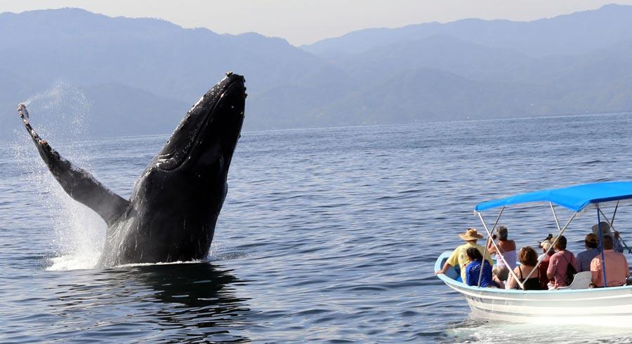 avistamiento-ballenas-2014-Pto-Vallarta1 (1).jpg