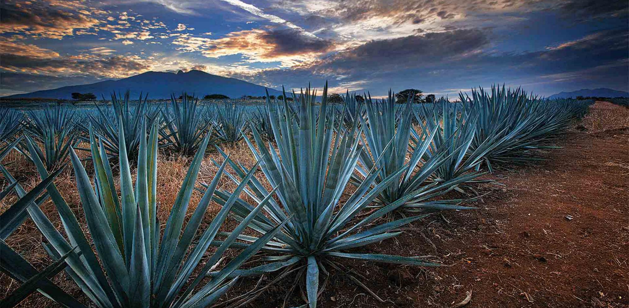 WEST MEXICO - COLIMAJALISCOMICHOACAN