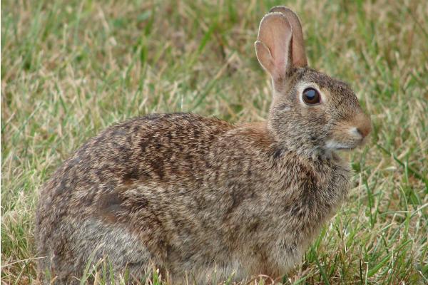 Rabbit Control.jpg