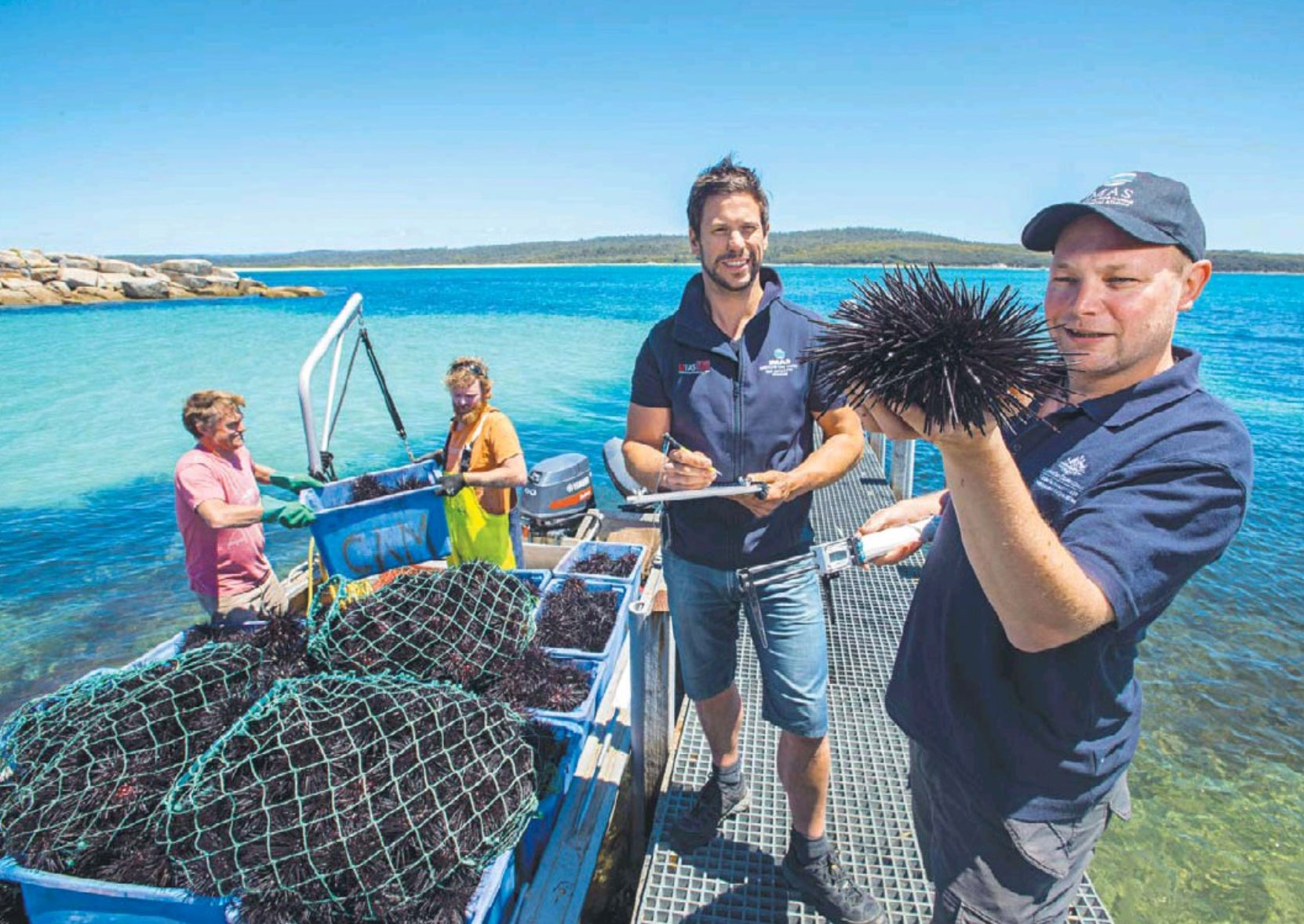 Marine scientists John Keane and Scott Ling, second from right, check two fishermen's spiny catch on Tasmania's east coast