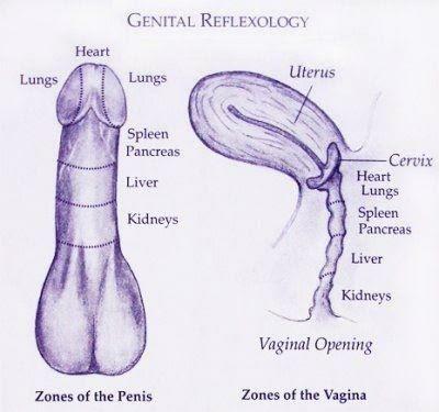 genitalreflex.jpg