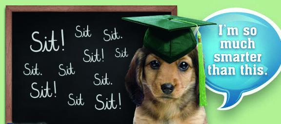 No, not Dog training- Owner Training! - Classes on a Thursday or by arrangementContact Natashya -  tashya1@hotmail.com