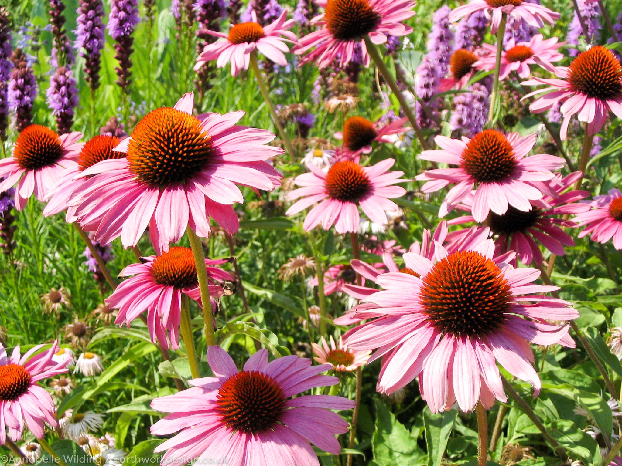 Garden Designer, Lymington.