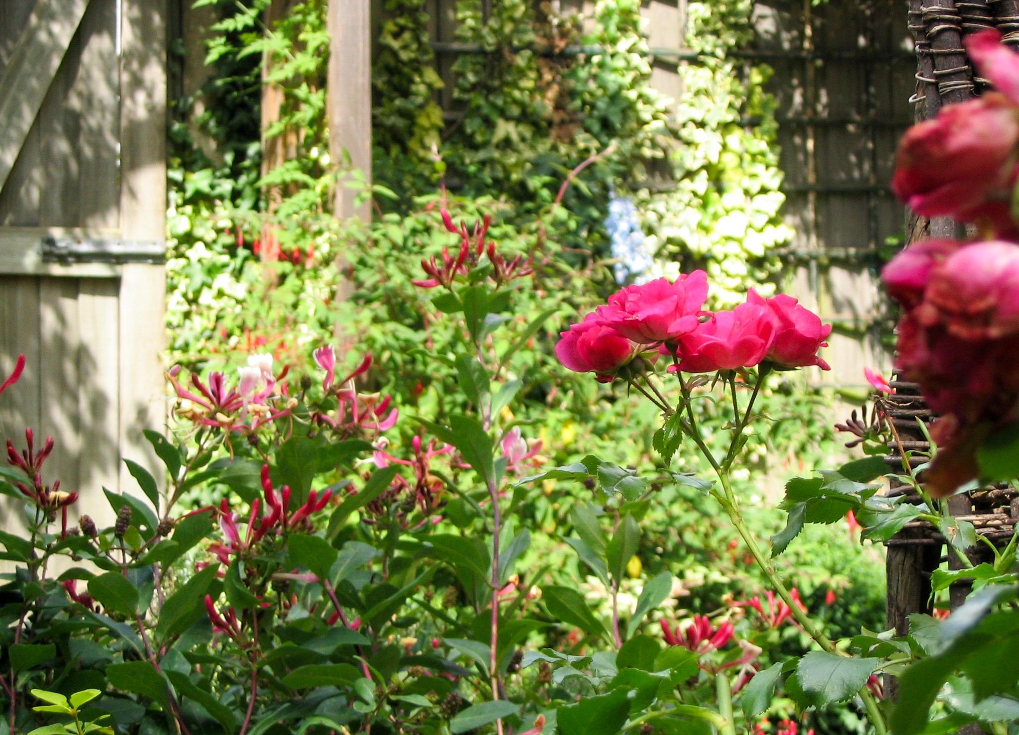 Walled garden 3.jpg