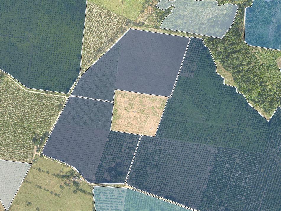 AVERAGE TREE COUNT PER FARM BLOCK