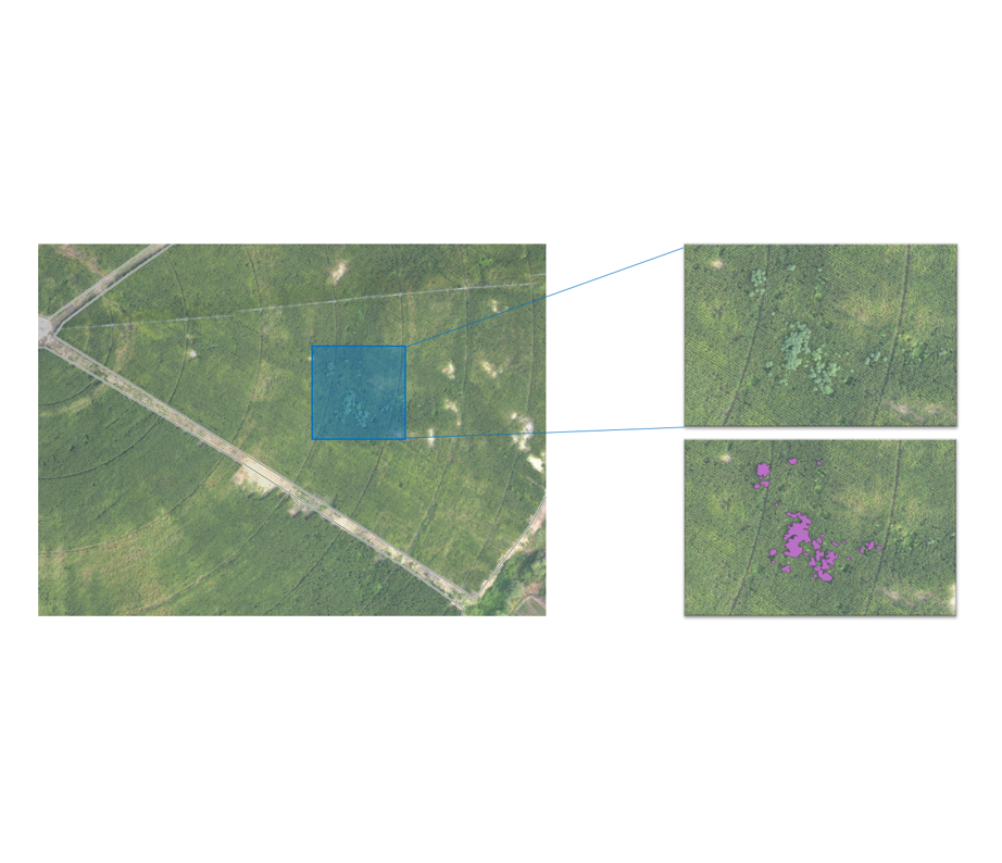WEED DETECTION