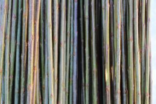 Bleu / Blues  Salix Purpurea Daphnoides    Bleu pilen stammer fra Frankrike. Den er meget flott og smidig flettepil. Metallgrønn til blågrønn i fargen. Sjelden angrepet av sykdommer. Velegnet flettepil.Kan også brukes til belgisk gjerde.   Bleu kan kjøpes som:   - Stikling - Levende pil -Flettepil