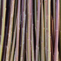 Rød Amerikaner    Salix Fragilis Americana    Rødbrun i farge. En veldig populær flettepil som er bløt og smidig. Velegnet til all flett,levende og tørket.   Rød Amerikaner kan kjøpes som:   - Stikling - Levende pil -Flettepil