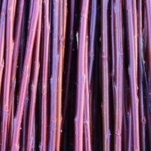 DugPil   Salix Dapnoides   God flettepil som er en utrolig flott kontrast farge i fletteverket, blir nesten helt sort hvis den tørkes mørkt.Velegnet som flettepil og levende pileflett. Flotte pollenbærere, velegnet i bigårder.   Dugpil kan kjøpes som:   - Stikling -Levende pil -Flettepil