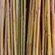Alba   Salix Alba Vittelina Britenzis   En god og myk pil, fin nybegynner flettepil med, vakker gul-orange farge. Egner seg som flettepil og levende pil.   Alba kan kjøpes som:   - Stikling -Levende pil