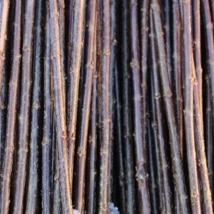Noir de Villaine   Salix Triandra gruppen   En god flettepil, egner seg best til levende pileflett.   Noir kan kjøpes som:   - Stikling -Levende pil